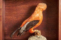 Stuffed bird in display case