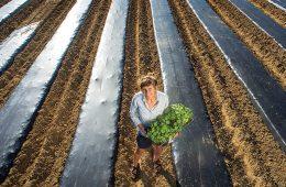 Liz Whitehurst on the farm