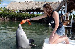 Gillian Schutt '20 with dolphin