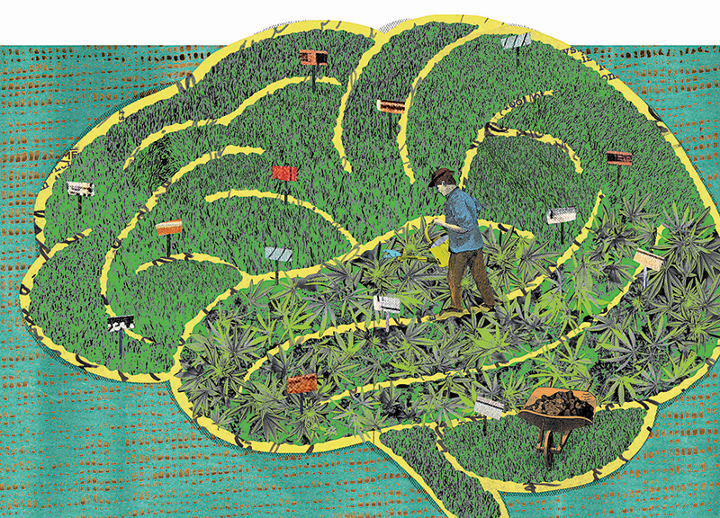 a collage illustration of a field of cannabis shaped like a human brain