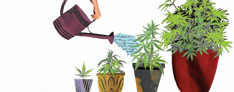 collage illustration of cannabis plants being watered at various life stages