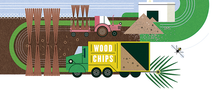 illustration of the Colgate willow farm and woodchips next to the biomass burner facility