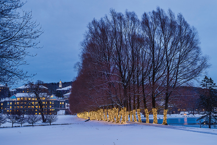 Lights on the trees on Willow path