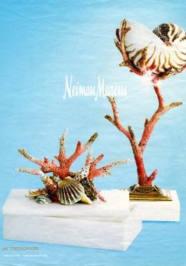 Chambered Nautilus – Nautilus pompilius