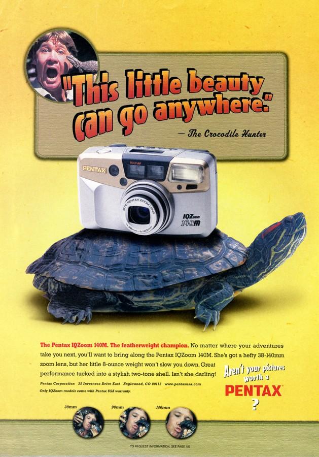 Turtle – Trachemys scripta elegans