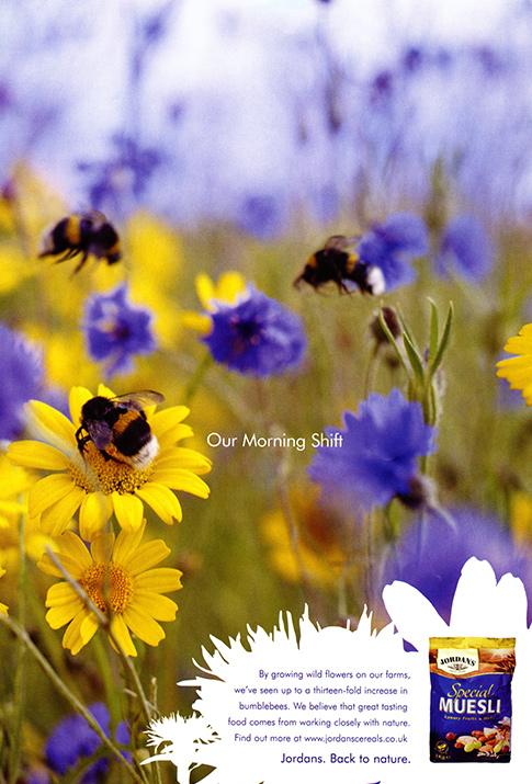 Bumblebee – Bombus hortorum