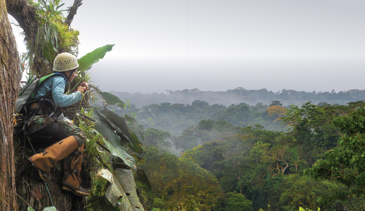 A Lab in the Canopy & Catherine Cardelús and Students Research Rainforest Canopy