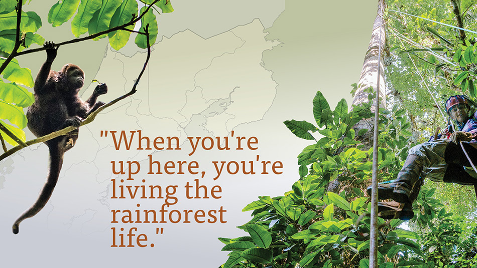 When you're up here, you're living the rainforest life.
