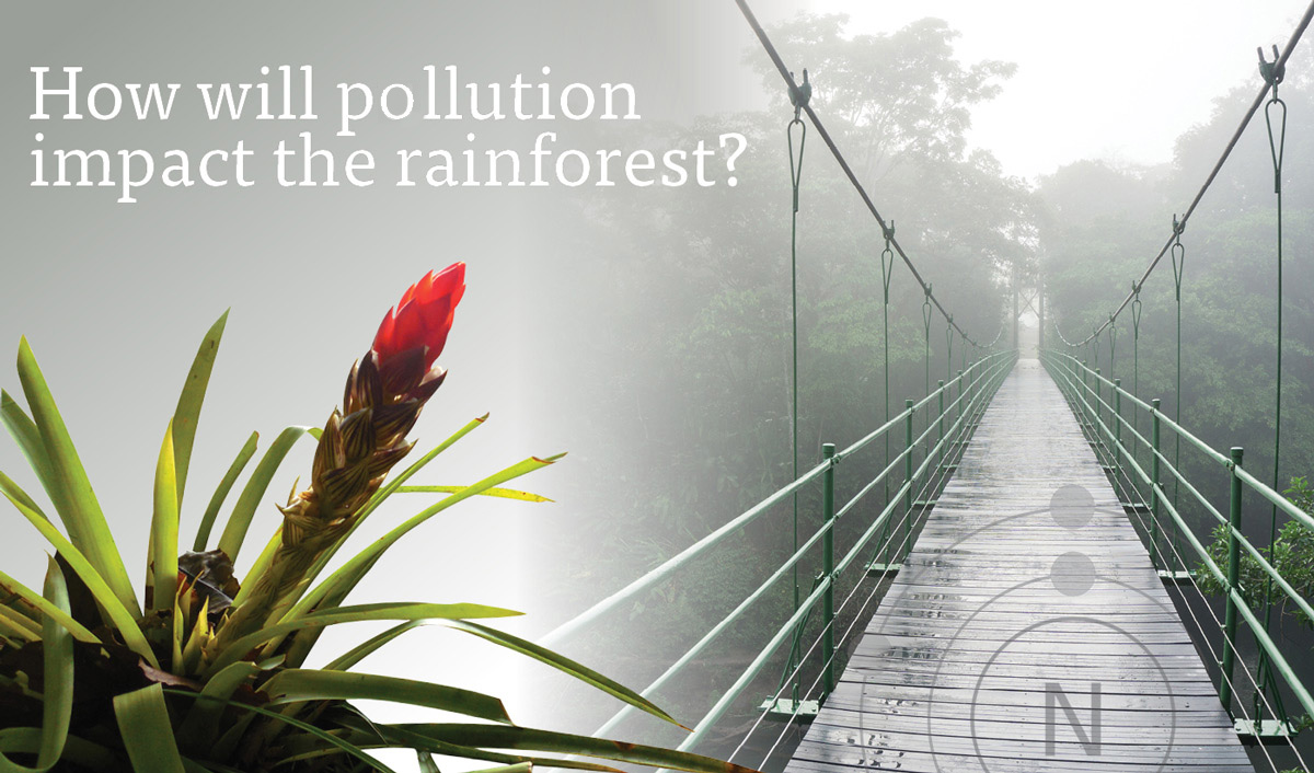 How will pollution impact the rainforest