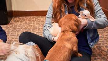 Student holding and petting therapy dogs