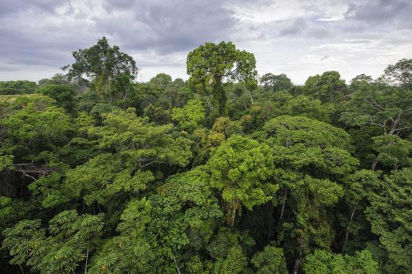 Madre de Díos rain forest