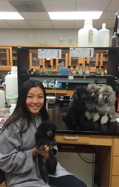 Xintao Ding '17 with poodles in the lab