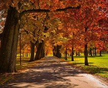 Oak Drive at Colgate during a beautiful fall.