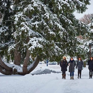 A winter walk past the great Norway spruce, a favorite climbing tree and sitting place year-round on the lower campus. Photo by Andrew Daddio