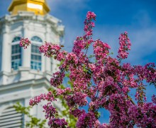 Pink flowering crabapple blossoms and a blue sky frame the chapel's golden cupola on a spring morning.