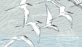 Illustration of birds in flight