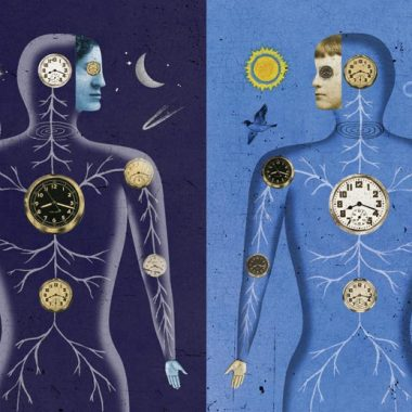 Illustration of the body at night and during the day