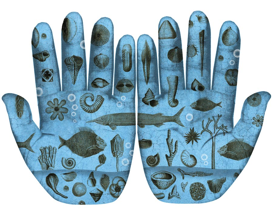 Illustration of ocean-dwelling creatures on hand palms