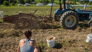 Caroline Boudreau '17 in the foreground while a tractor harvests produce in the background