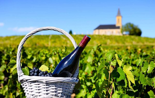 Grapes and wine in a basket with the vineyard and a church in the background