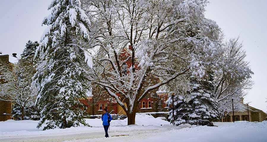 A tree's boughs outside of Hascall Hall are heavy with snow as a student walks past.