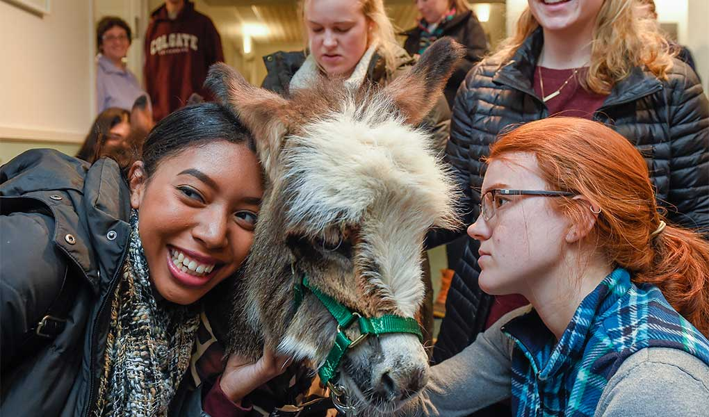 Students cuddle a miniature donkey
