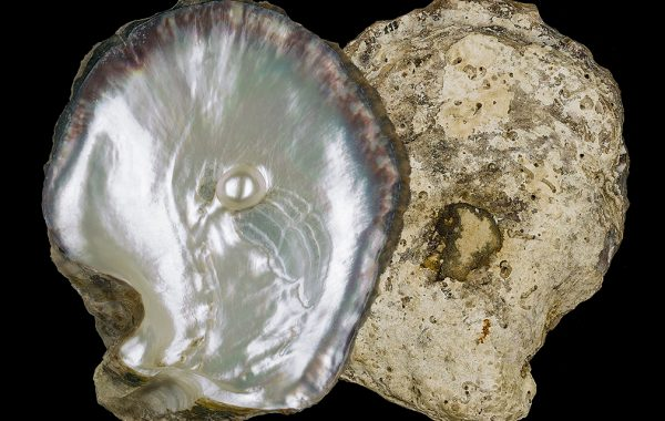 photo of pearl in an oyster