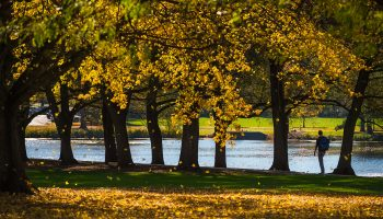 A student observes Taylor Lake amidst the fall foliage of Willow Path
