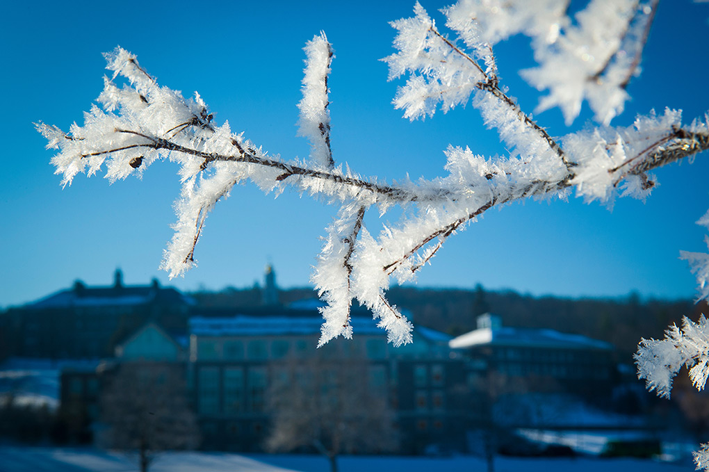Ice crystals on frozen tree branch