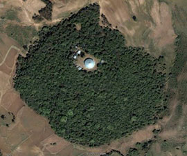 Sacred forest around Ethiopian church.