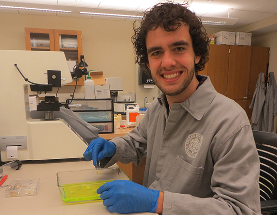 This summer, Brett Christensen '16 has been raising barnacles at various life stages for a biomineralization experiment.