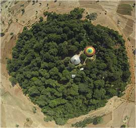 Sacred forest in Ethiopia from above showing green circle of trees with church roofs at center
