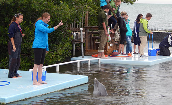 Tori Hymel stands on a platform looking down at a dolphin