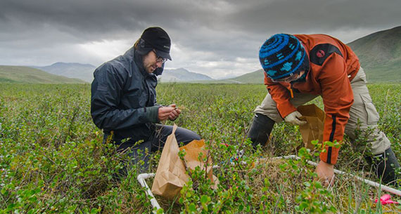 Professor Mike Loranty (left) conducts research in Alaska with a student. Photo by Sarah Hewitt