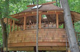 Children in a massive treehouse.