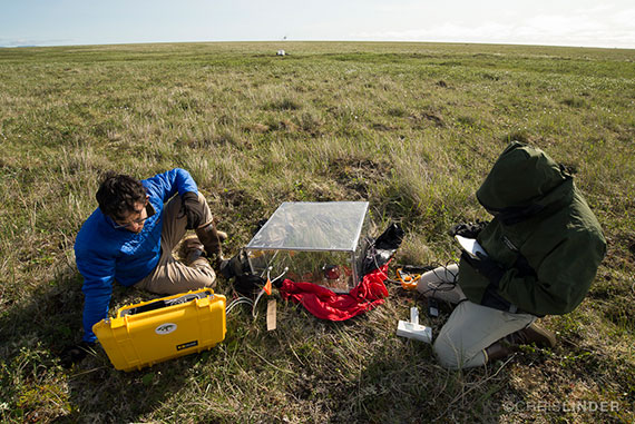 Sal Curasi '15 (left), pictured here doing research in the field, recently published his senior thesis in Environmental Research Letters. Photo by Chris Linder