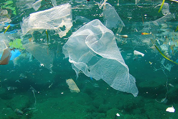 Plastic bag floating in the ocean.