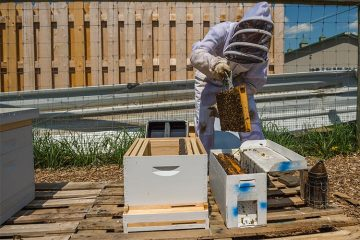 Beekeeping club gets underway with installation of new hives at the Community Garden.